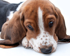 Six Signs Your Pet Is Sick