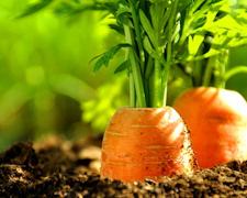 Easy Organic Garden Tips